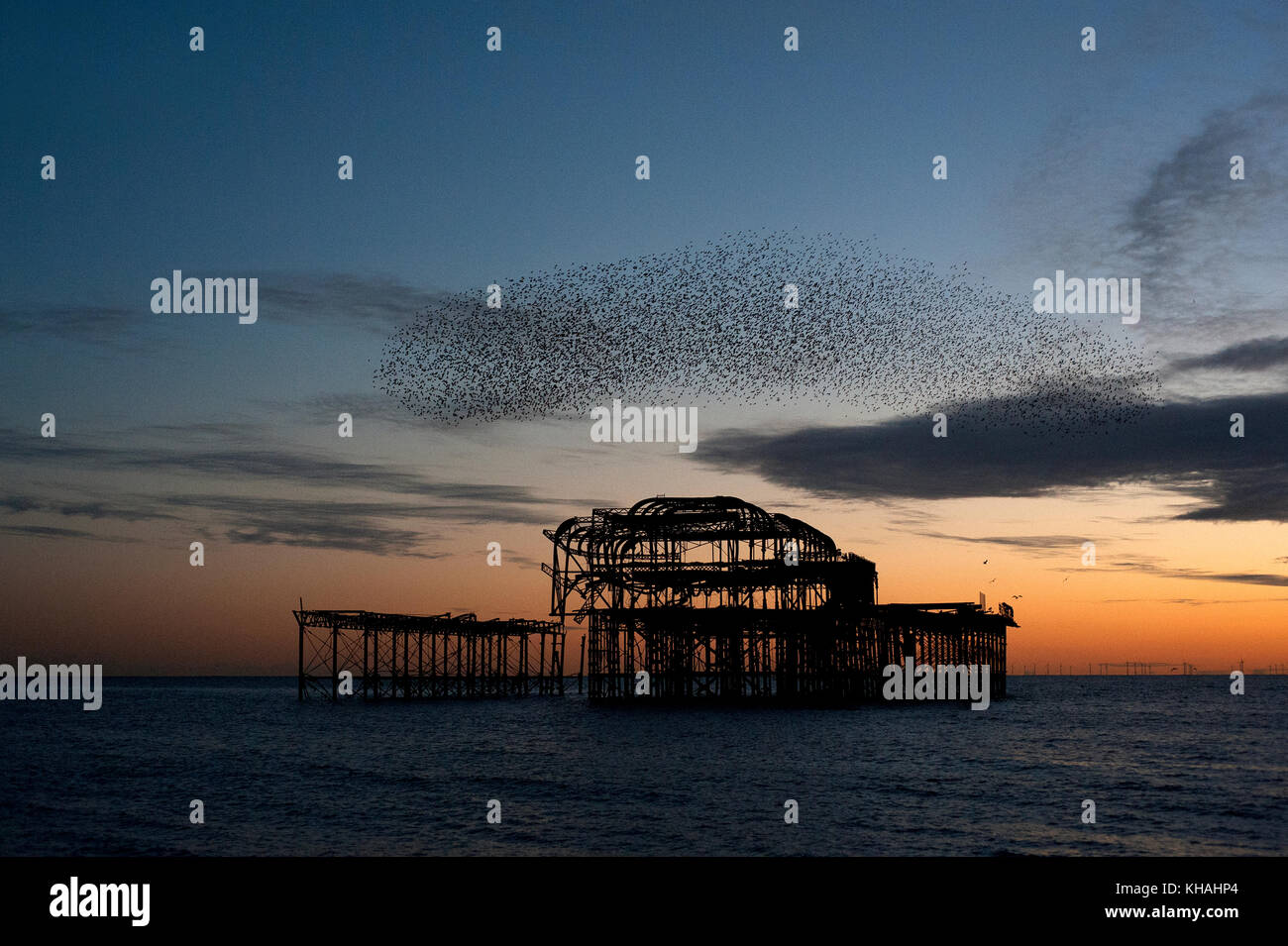 Murmuration over the ruins of Brighton's West Pier on the south coast of England. A flock of starlings swoops in a unified masover the pier at sunset. Stock Photo