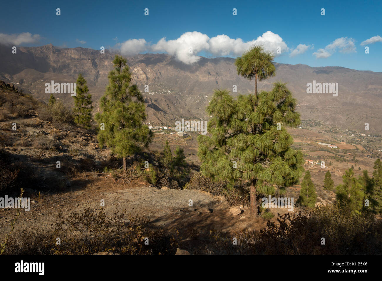 Mountain views inland of Canarian pine trees looking up to the high point of Pico de las Nieves, Gran Canaria, Canary - Stock Image