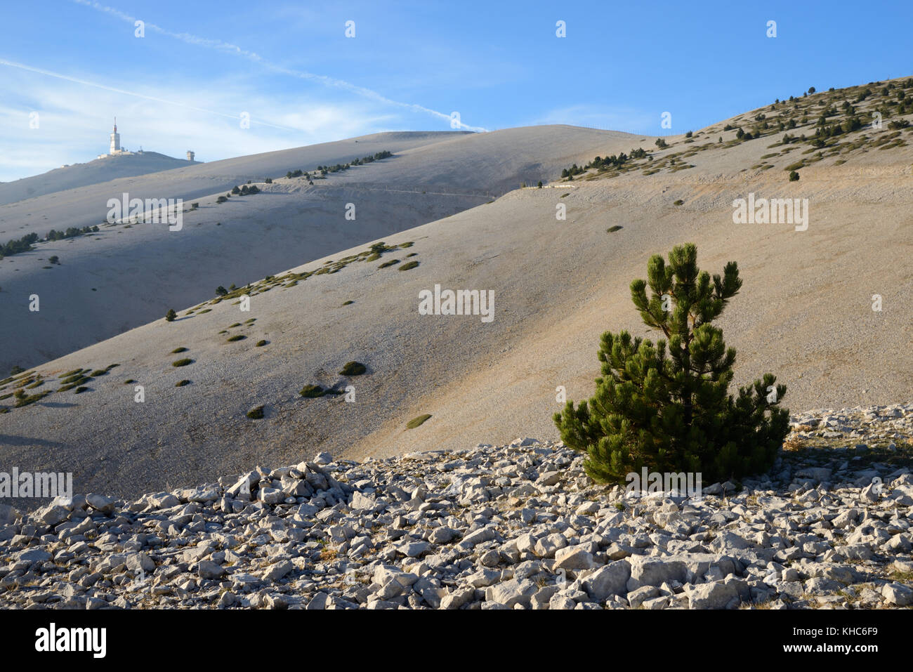 Sparse Vegetation & Single Pine Tree on the Barren Eastern Slopes of the Mont Ventoux Mountain, the 'Giant - Stock Image