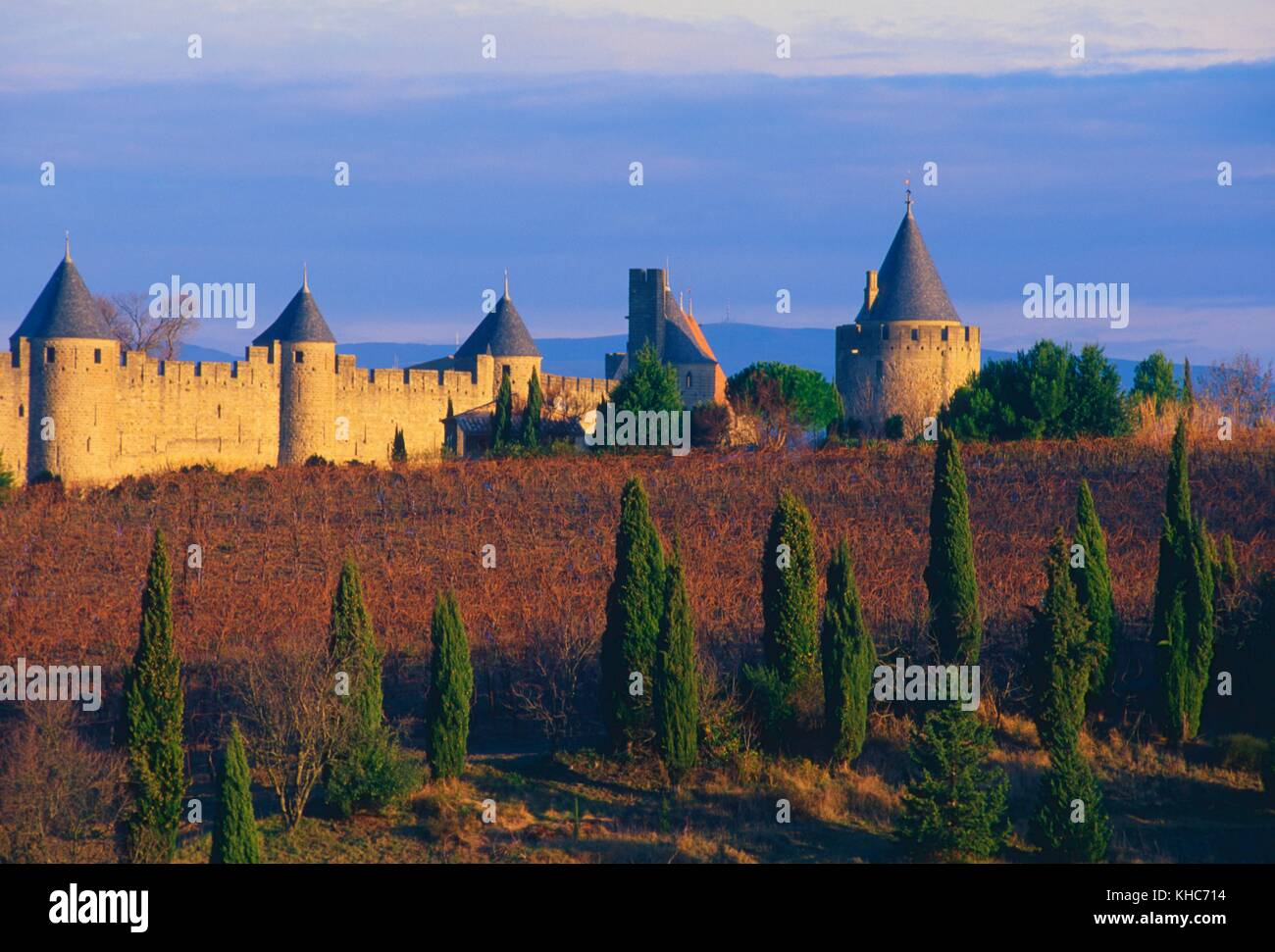 Carcassone, walls, fortifications, watchtowers, castle, city, vineyard, common grape vine, wine making, Cypresses, Stock Photo