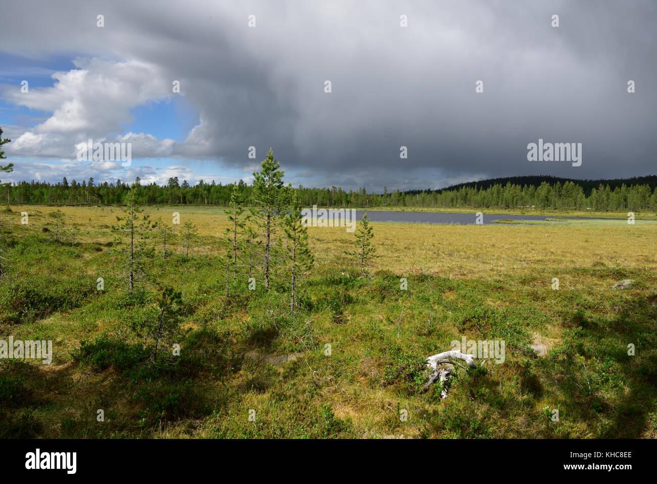 Marsh, moor, lake, forest, thunderstorm, Särna, Heden-Särna kommun, Dalarna county, Sweden *** Local Caption - Stock Image
