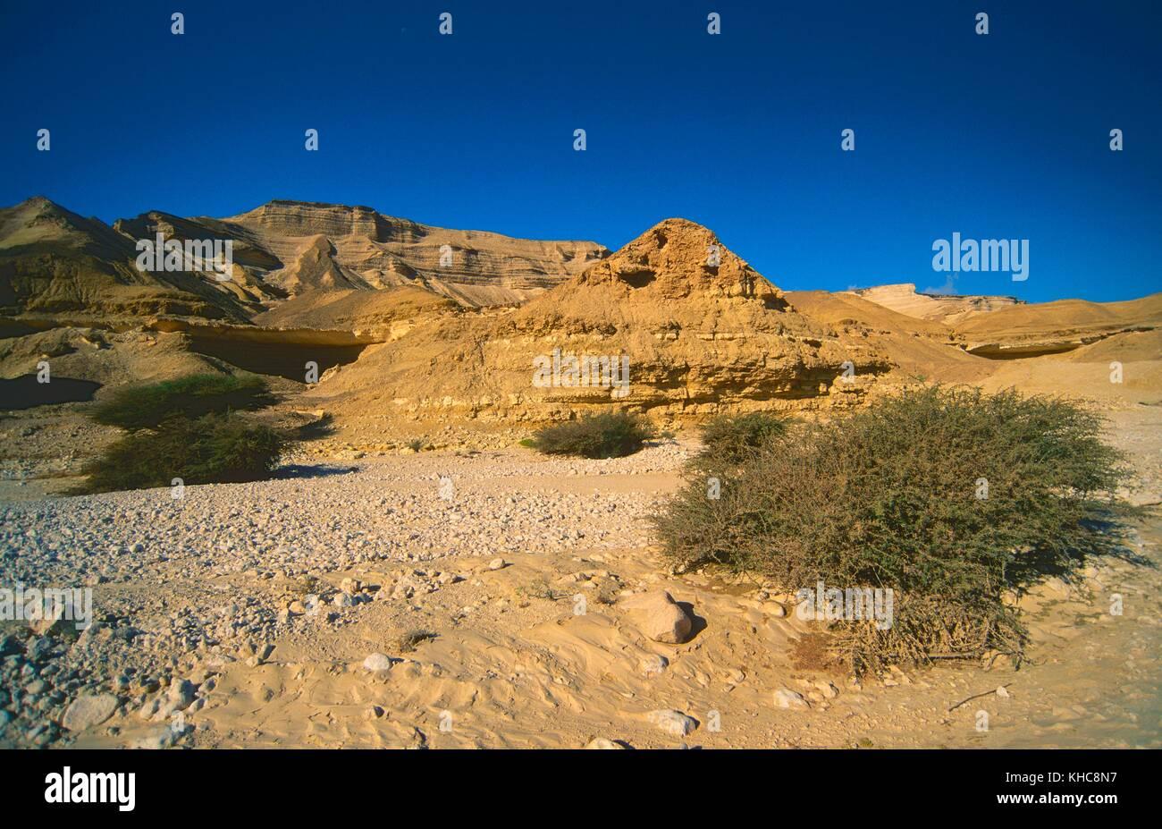 Wadi, Wadi Ash Shuwaymymiyah, desert, mountains, rock faces, Acacias, Oman *** Local Caption *** Wadi, Wadi Ash - Stock Image
