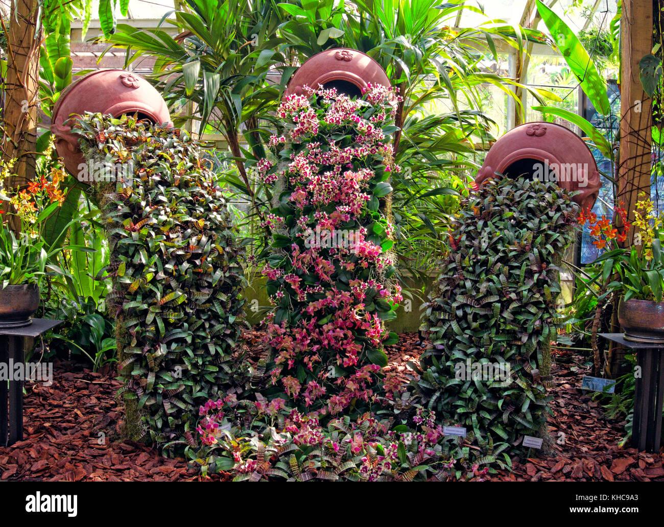 Greenhouse display - Marie Selby Botanical Gardens, Sarasota FL - Stock Image