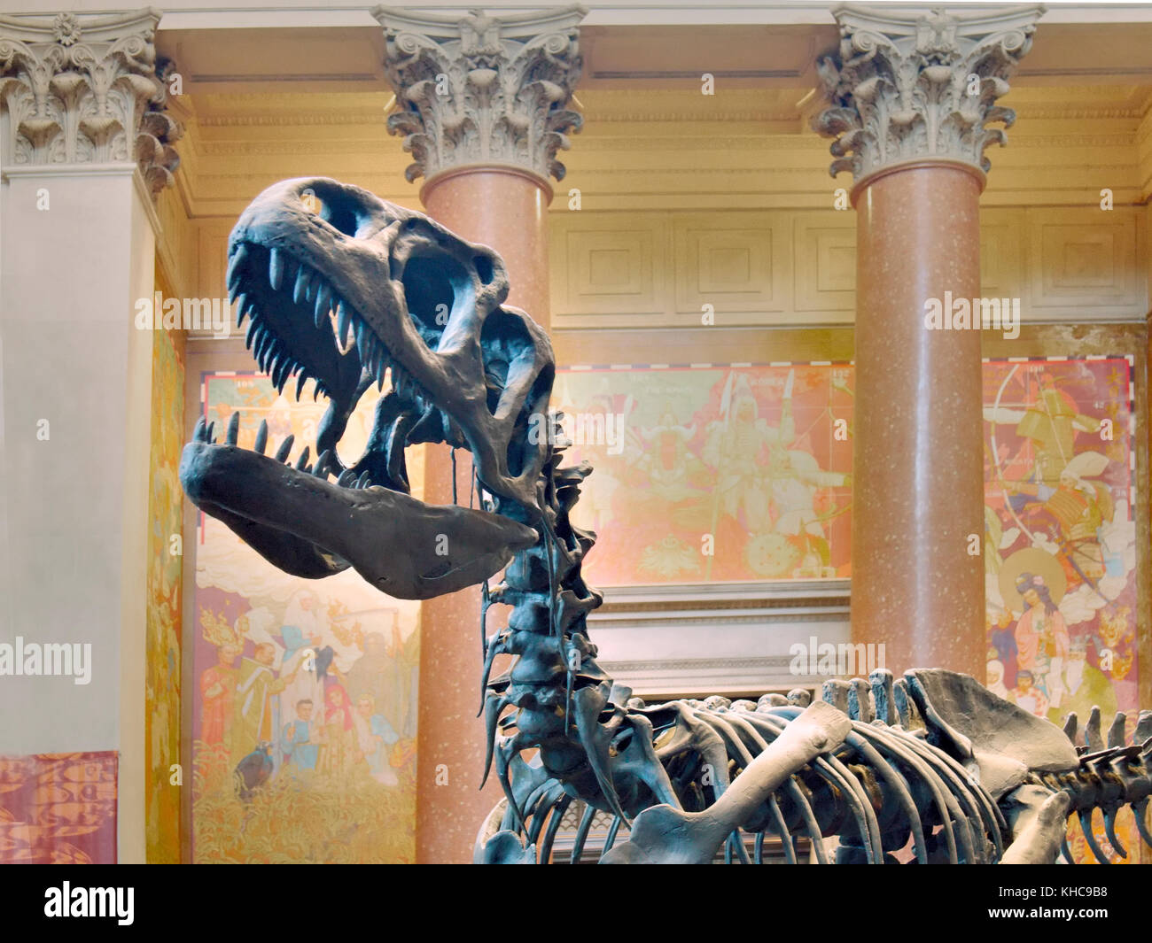 T-Rex on display, Museum of Natural History, New York - Stock Image