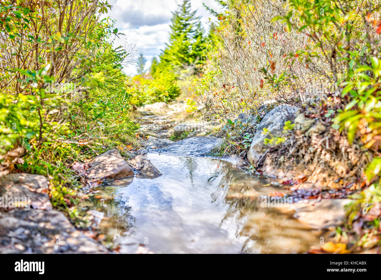 Large puddle on boggy bog area hiking trail in Dolly Sods, West Virginia between bushes and calm reflection closeup - Stock Image