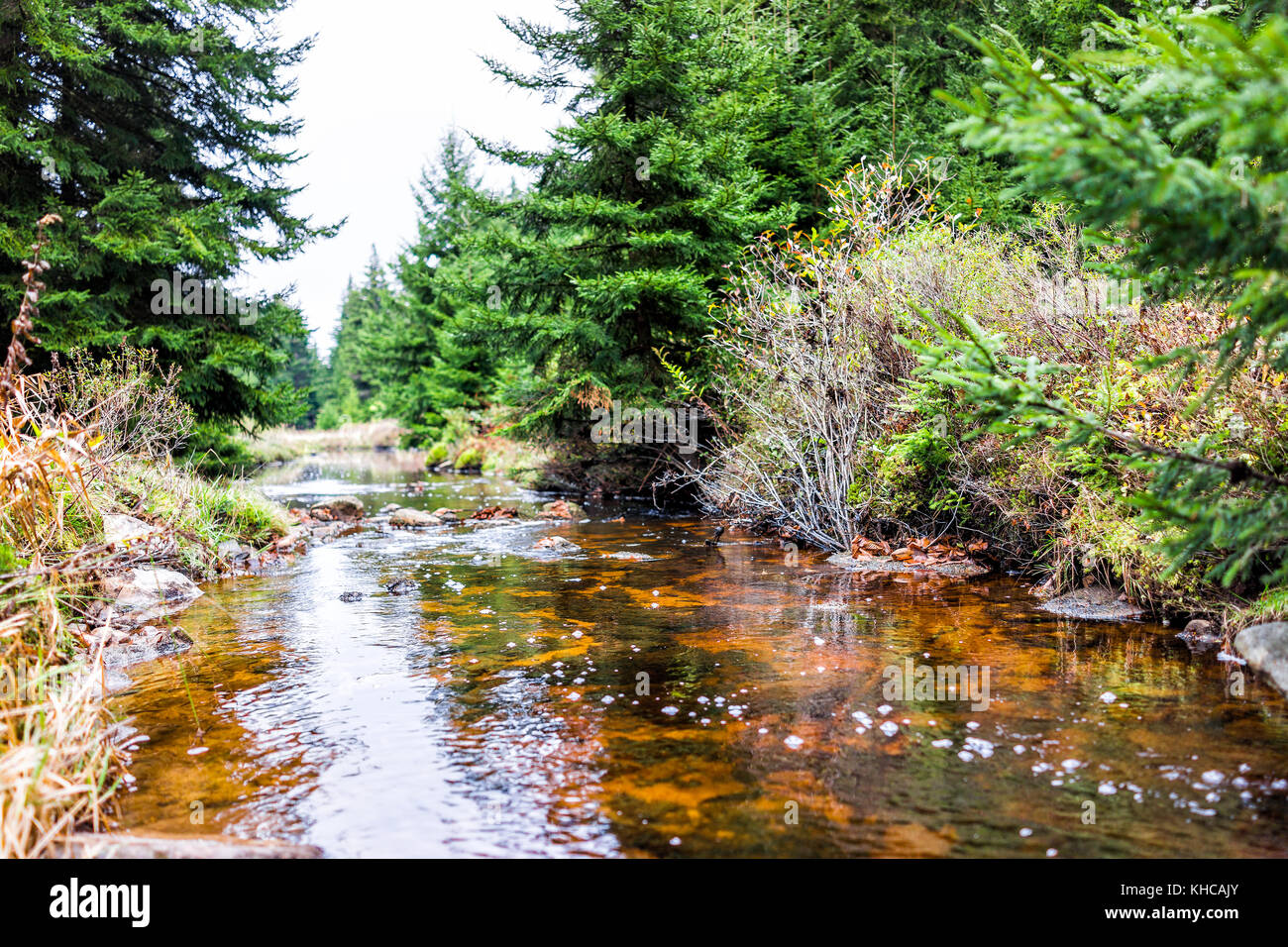 Closeup of red creek in Dolly Sods, West Virginia during autumn, fall with green pine tree forest and water river - Stock Image