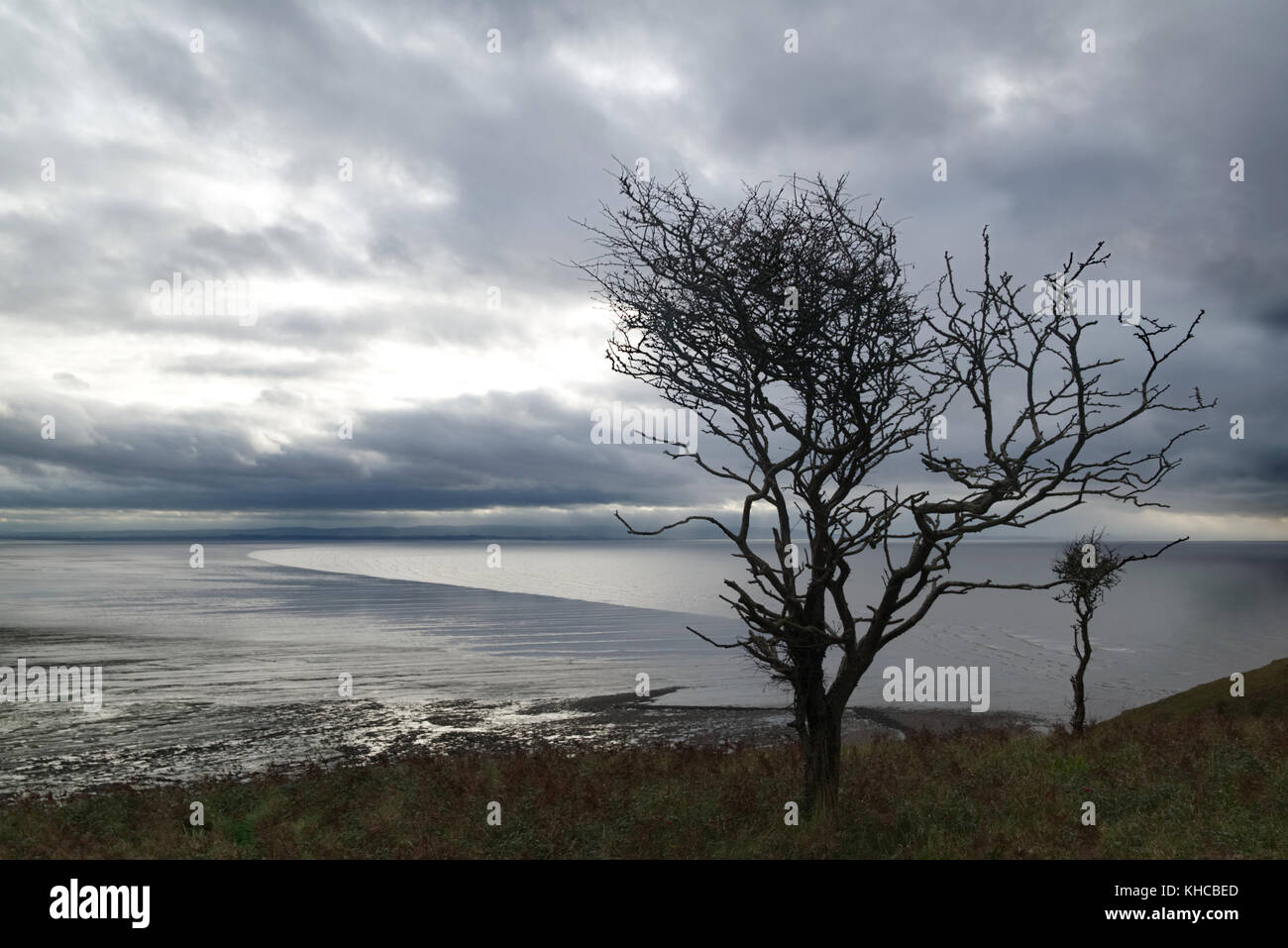 Silhouette of windswept trees on Brean Down, Somerset, England looking out to sea Stock Photo