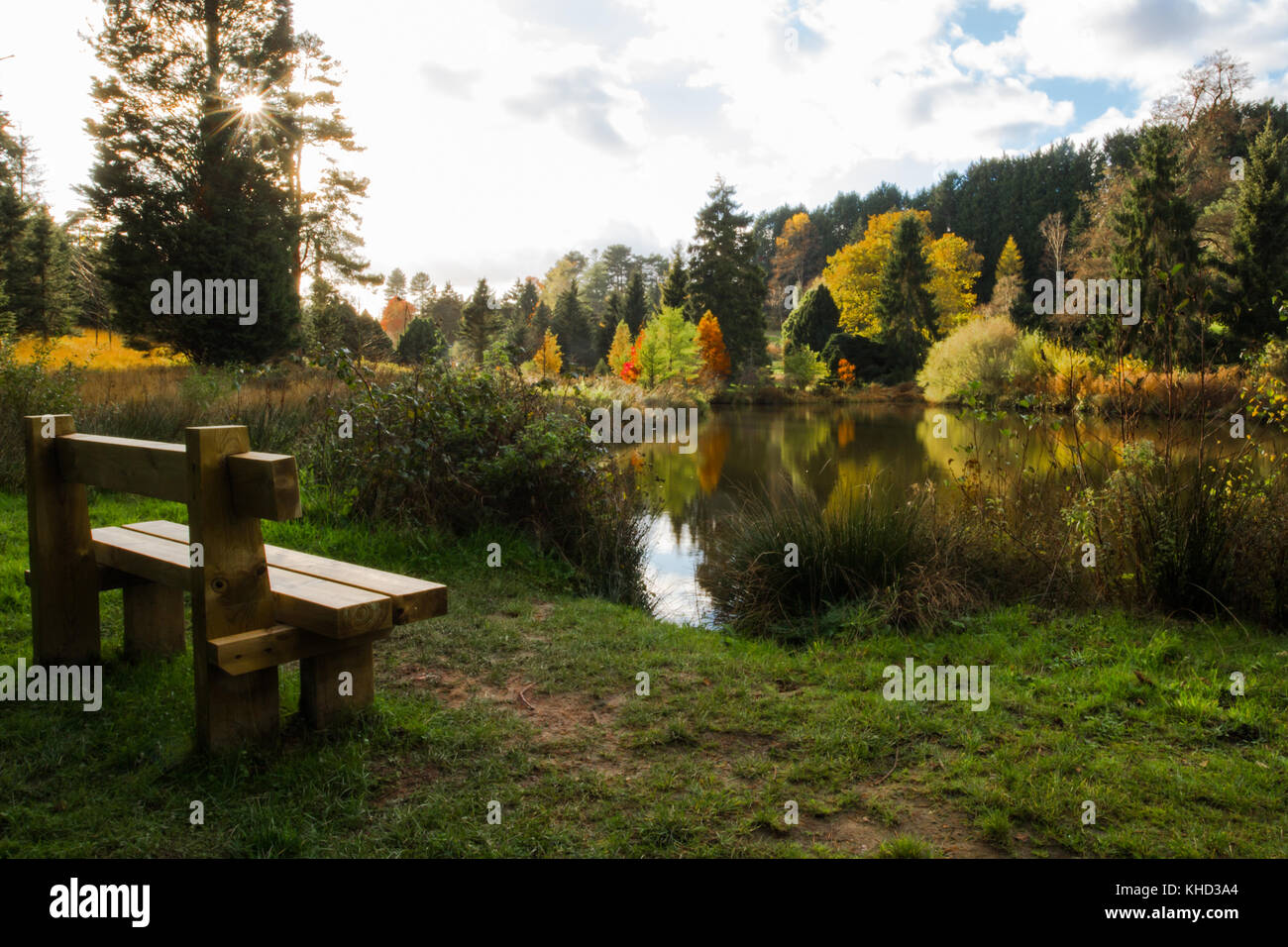 Bedgebury Pinetum & Forest in November, Autumn. Tourist attraction on outskirts of Tunbridge Wells / Goudhurst. - Stock Image