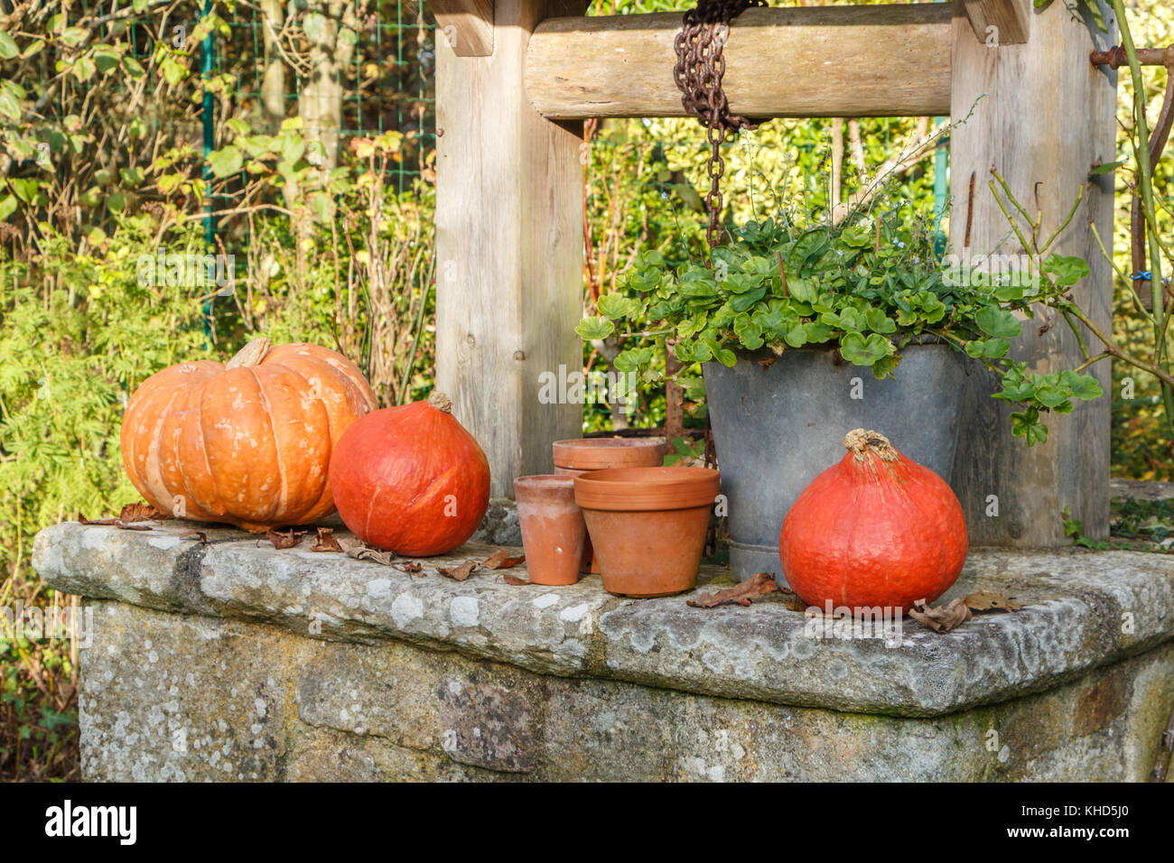 Pumpkins on the coping of a well after harvest during autumn - Stock Image
