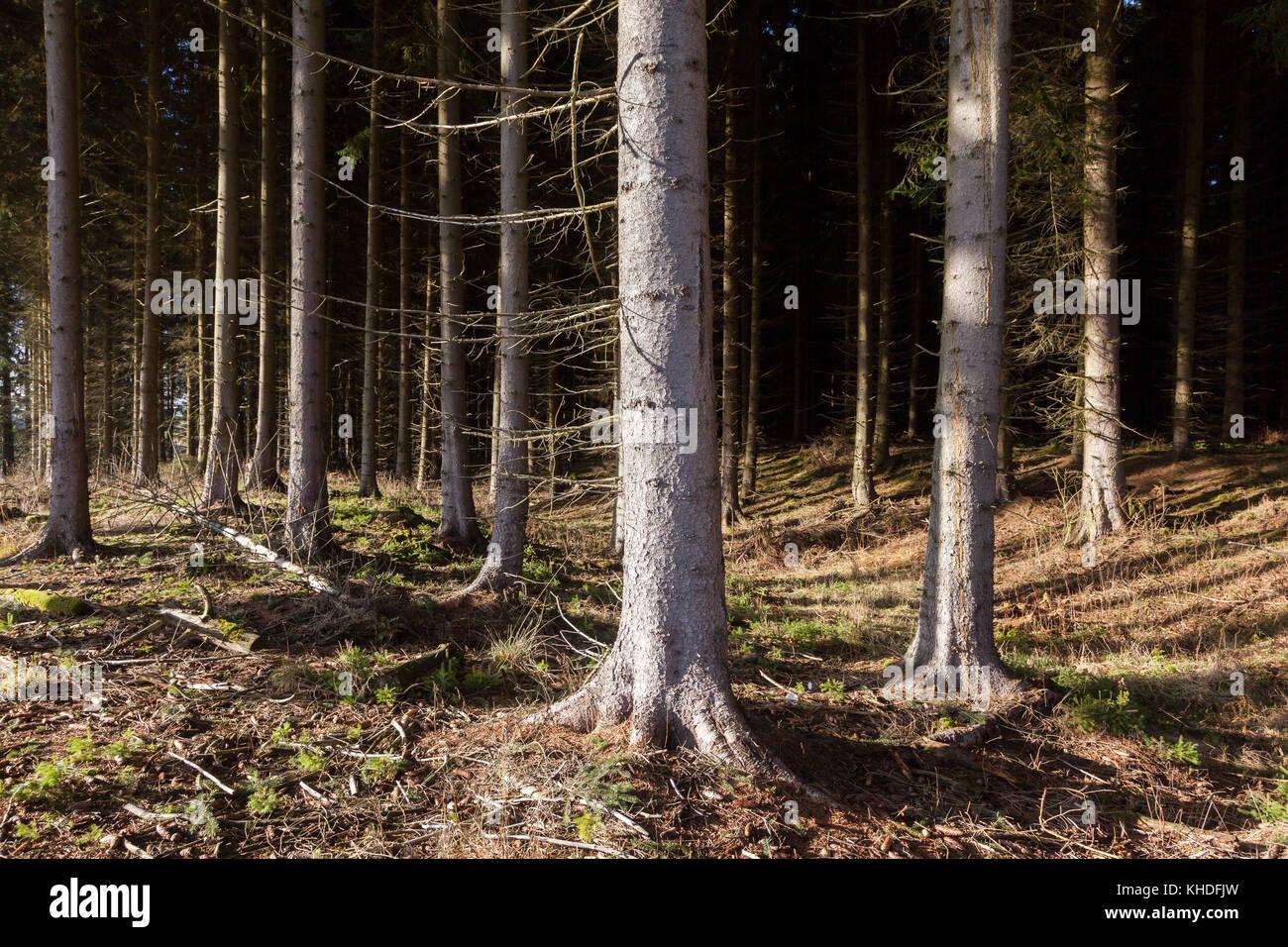 Wald - Stock Image