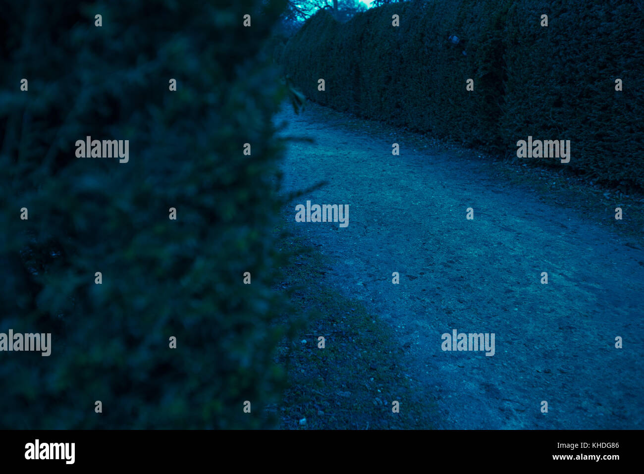 Path in hedge maze Stock Photo