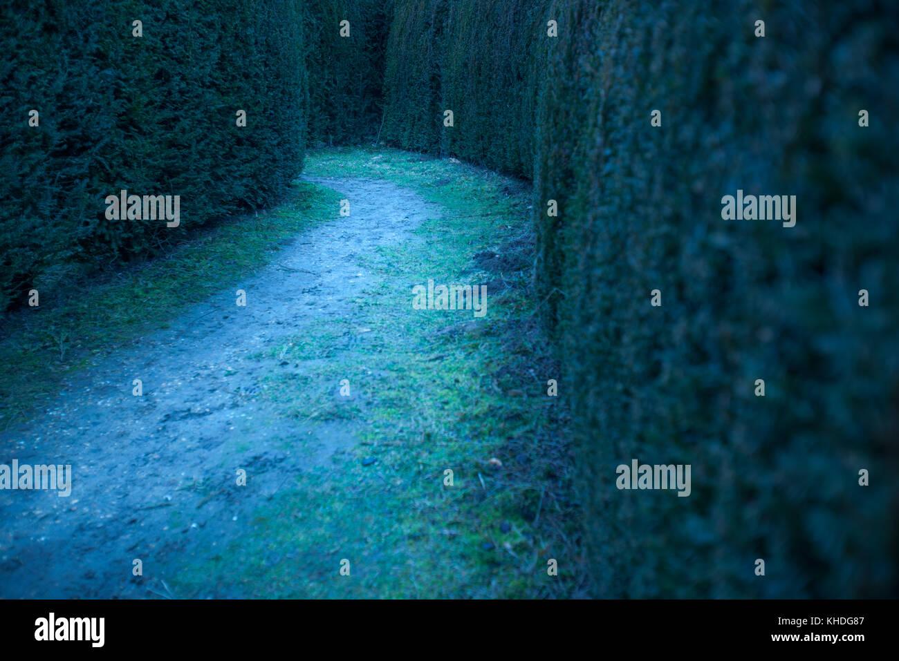 Path in hedge maze Stock Photo