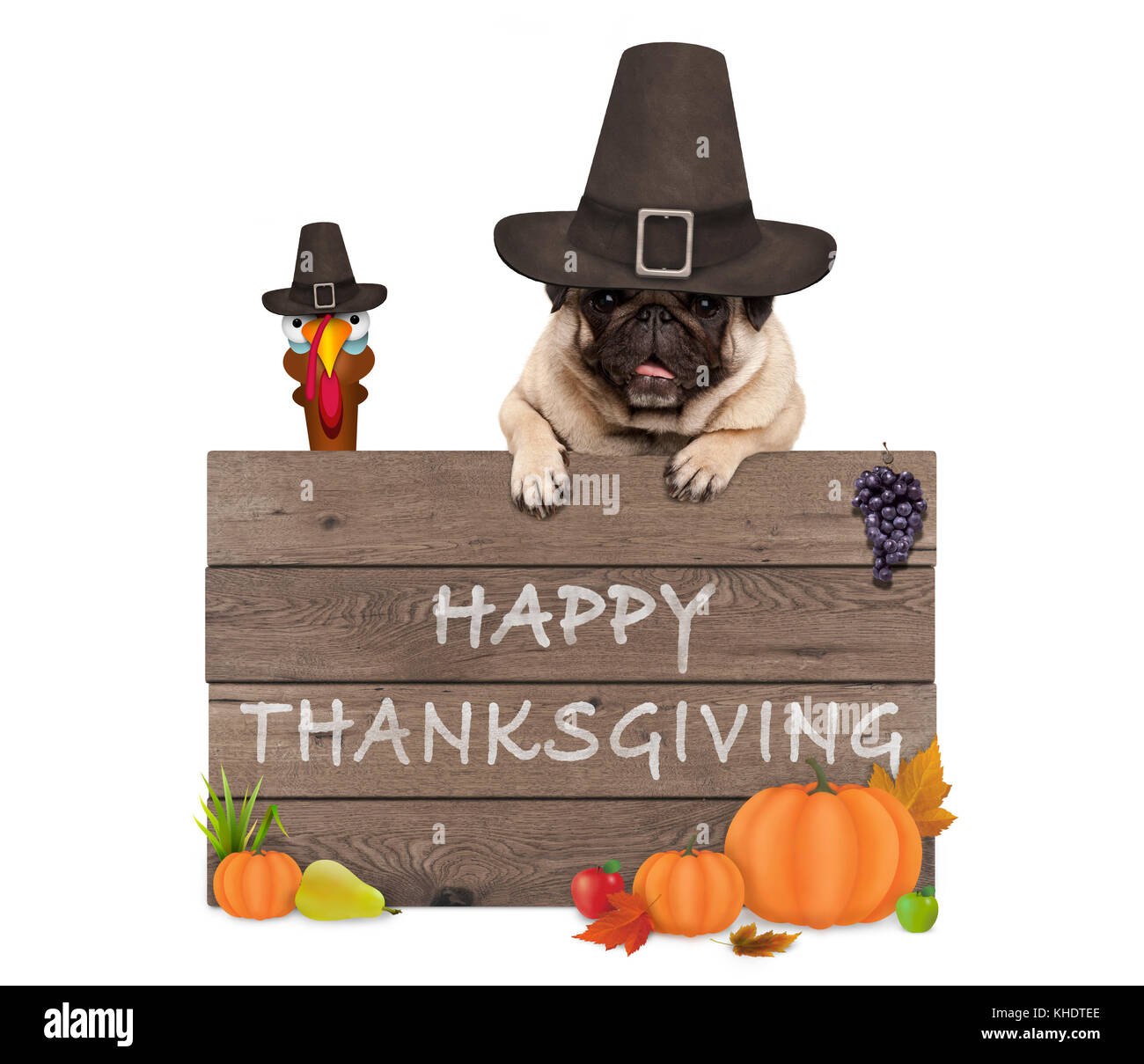 funny turkey and pug dog wearing pilgrim hat for Thanksgiving day and wooden sign with text happy thanksgiving, - Stock Image