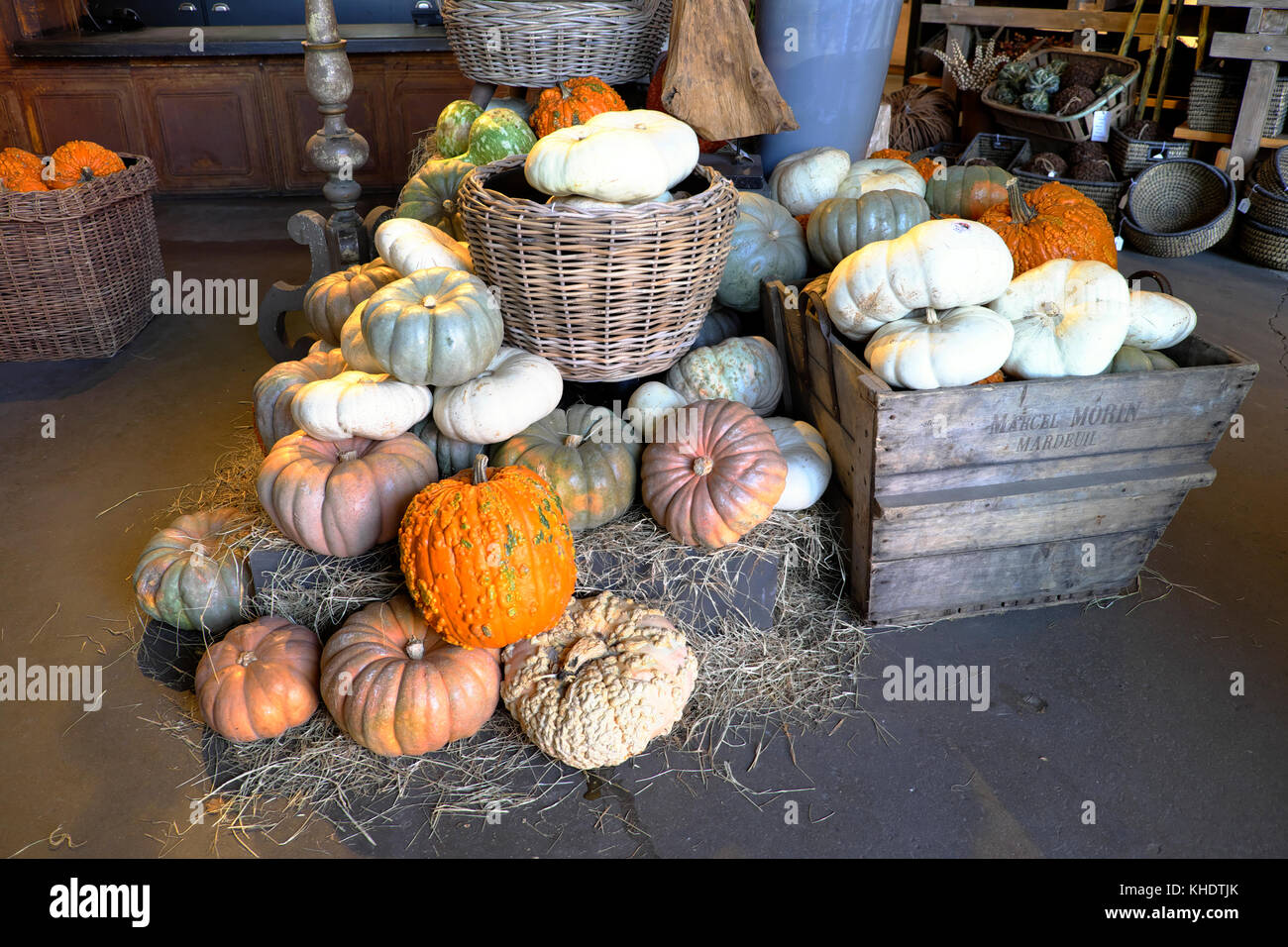 Selection of various gourds and pumpkins for sale at Halloween inside a garden centre shop in Los Angeles, California - Stock Image