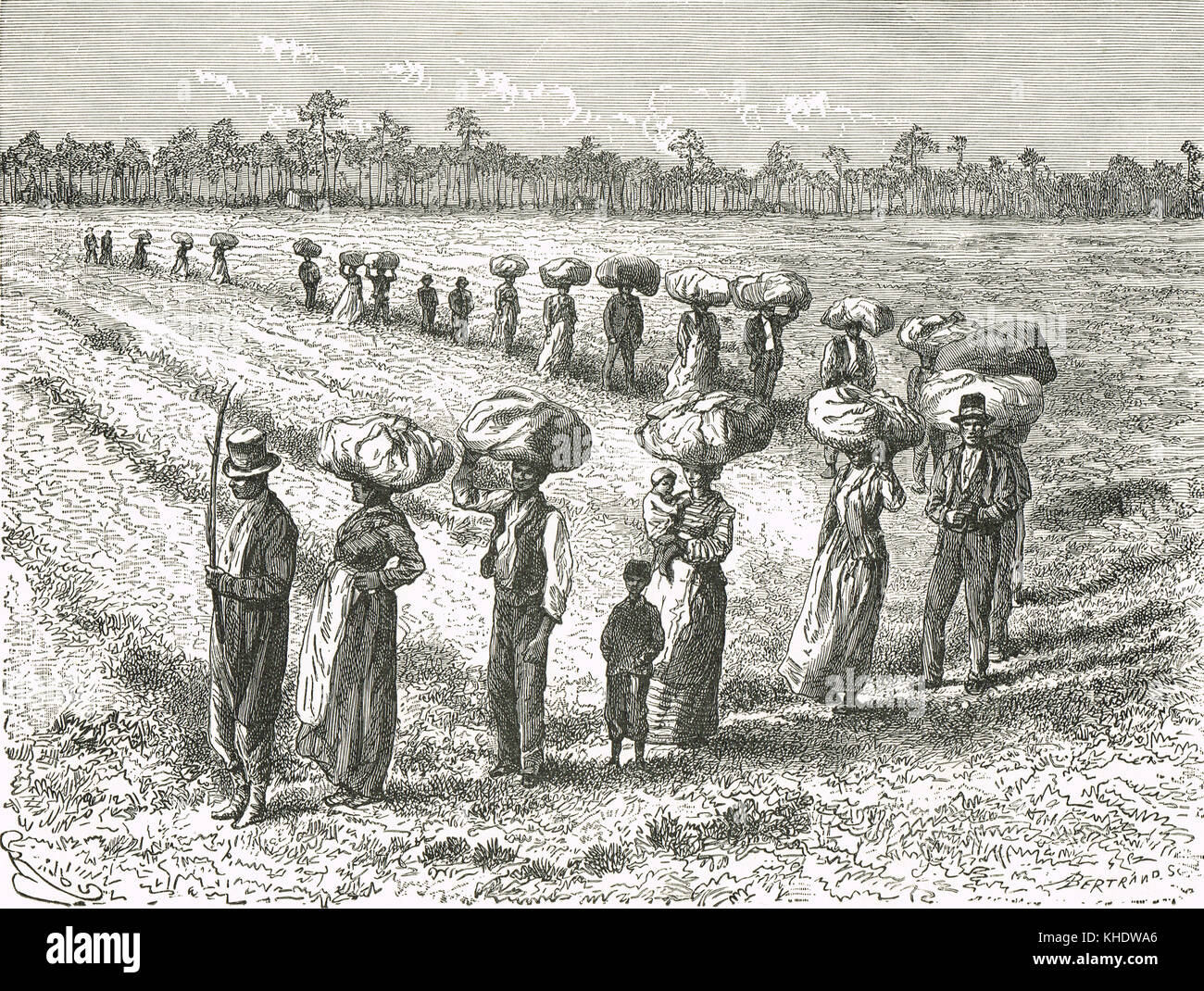 A 19th Century cotton harvest in Georgia, United States - Stock Image