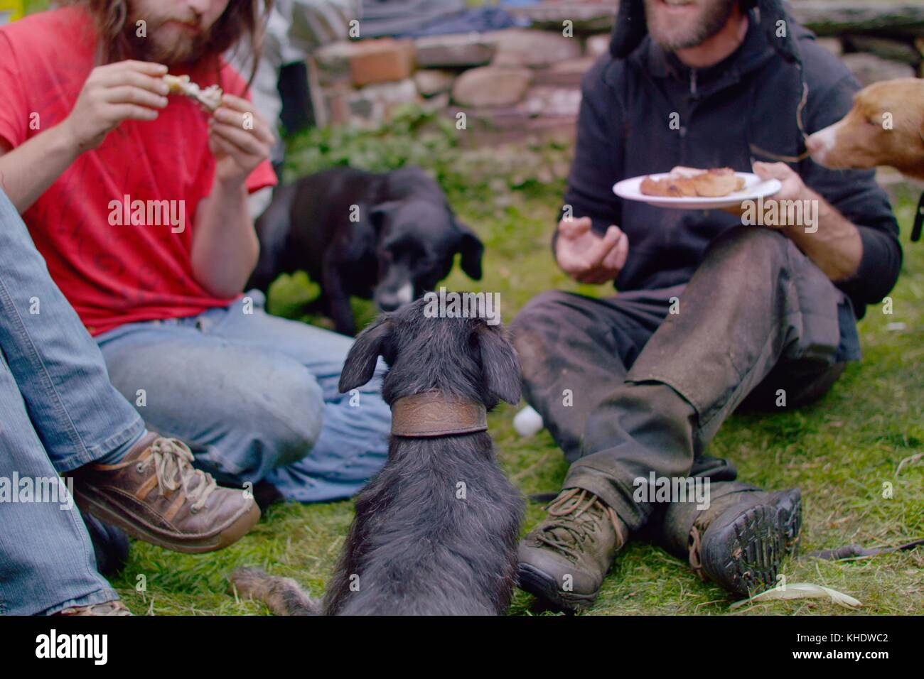 People eating, sat on the ground with dogs waiting for food scraps, Wales, UK - Stock Image