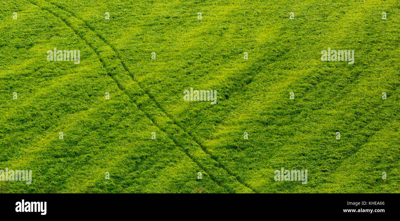 A tractor path intersects a late autumn foraged field. - Stock Image