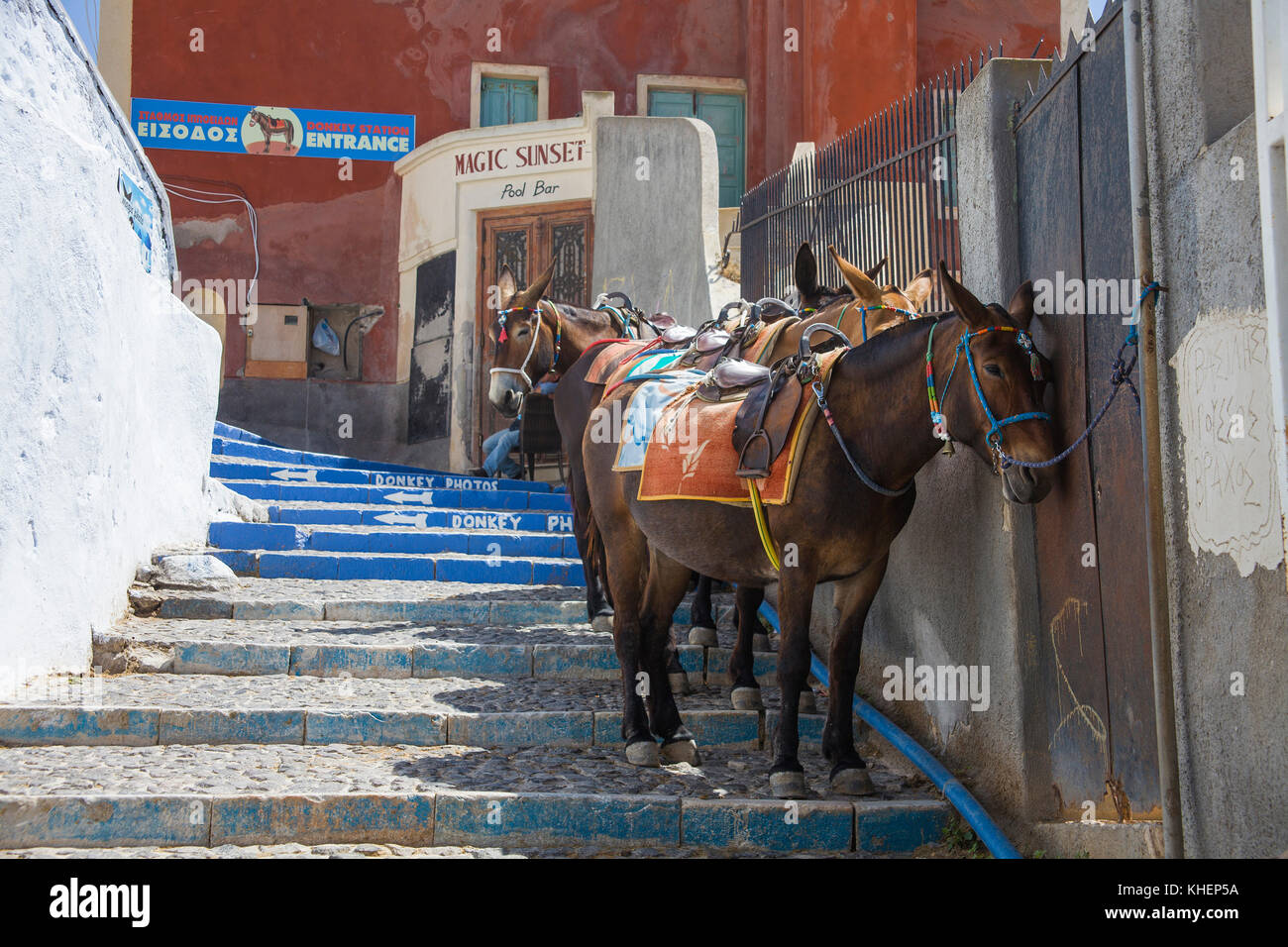 Donkeys waiting at shadow mural for tourists, tourist transportation down to the old harbour of Thira, Santorin - Stock Image