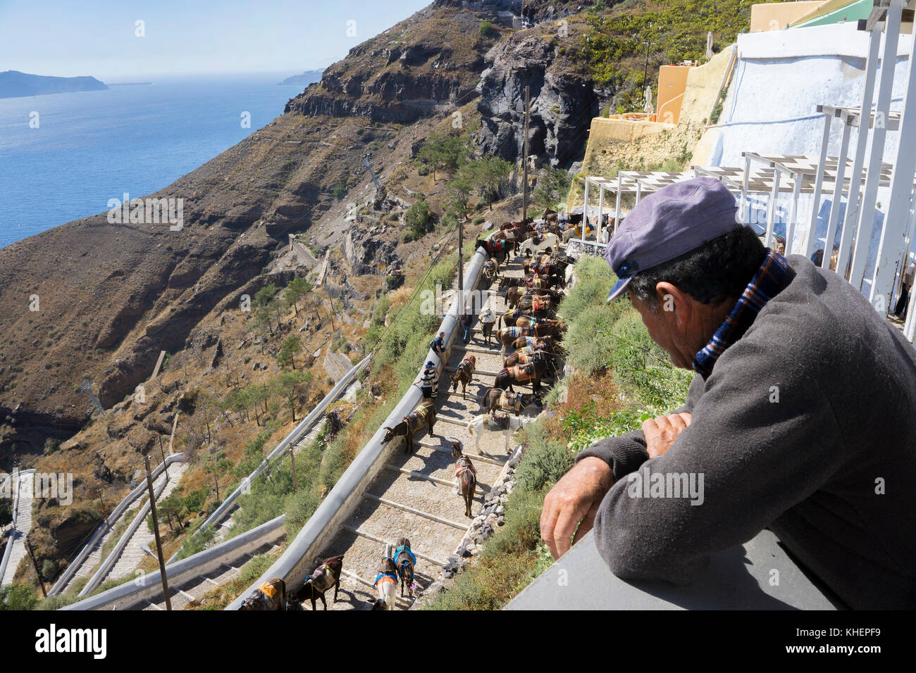 Greek watching donkeys at the stairway down from Thira to the old harbour, Thira, Santorin island, Cyclades, Aegean, - Stock Image