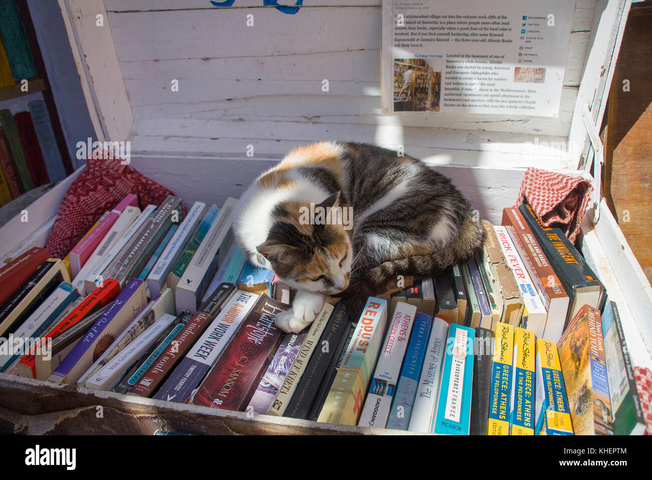 Cat sleeps on books in a suit case, shop at Oia, Santorin island, Cyclades, Aegean, Greece - Stock Image
