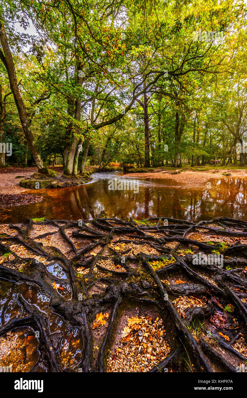 Upright View Of Ober Water, The New Forest, Hampshire, UK. Stock Photo