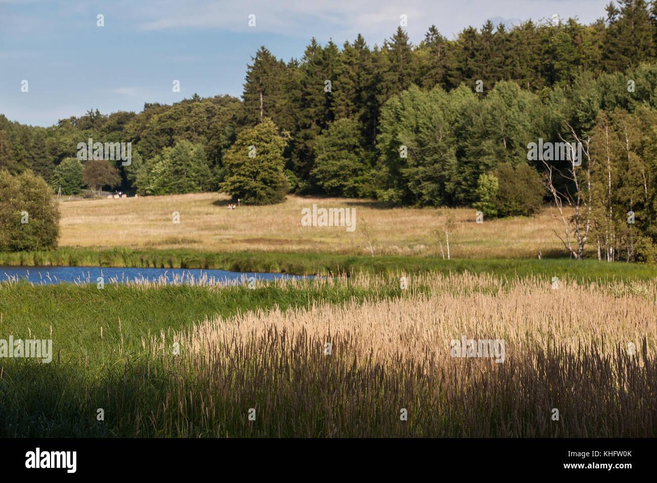 Landschaftsaufnahme Harz mit Weiher - Stock Image