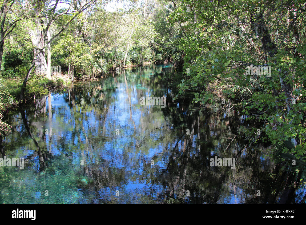 Dreamy landscape of a river with water reflections of trees at Silver Springs State Park Florida - Stock Image