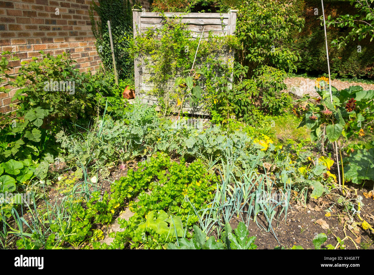 Homegrown vegetable patch allotment in front garden, Kent, UK - Stock Image