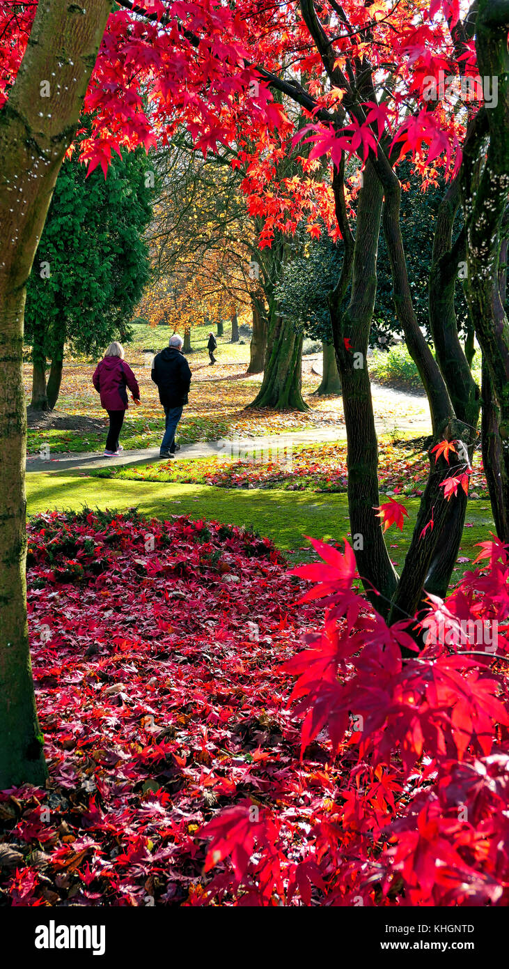 Ashbounre Park, Derbybshire, UK. 17th November, 2017. UK Weather bright colourful autumn day in Ashbounre Park, Stock Photo