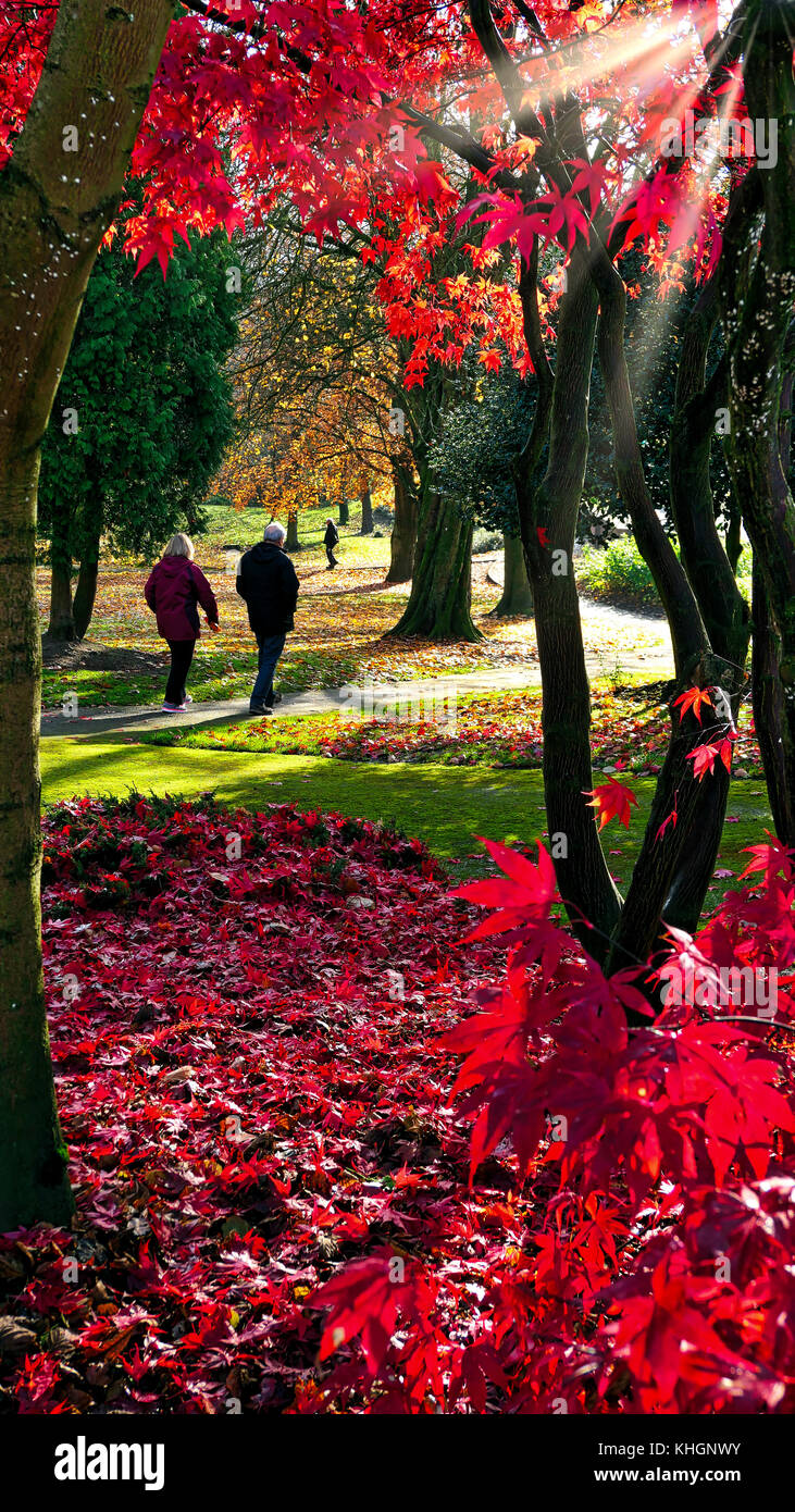 Ashbourne Park, Derbybshire, UK. 17th November, 2017. UK Weather bright colourful autumn day in Ashbourne Park, Stock Photo