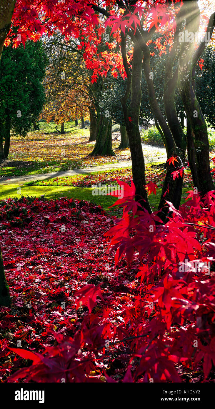 Ashbourne Park, Derbybshire, UK. 17th November, 2017. UK Weather bright colourful autumn day in Ashbourne Park, - Stock Image