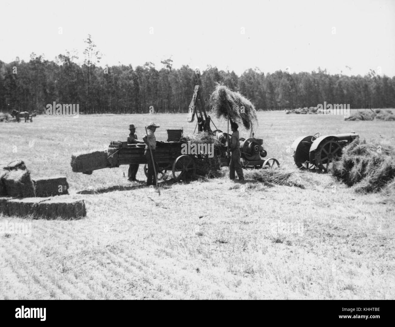 2 204084 Making hay on the farm, 1930s - Stock Image