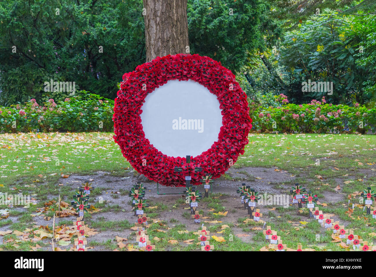 Poppy wreath for remembrance day - Stock Image