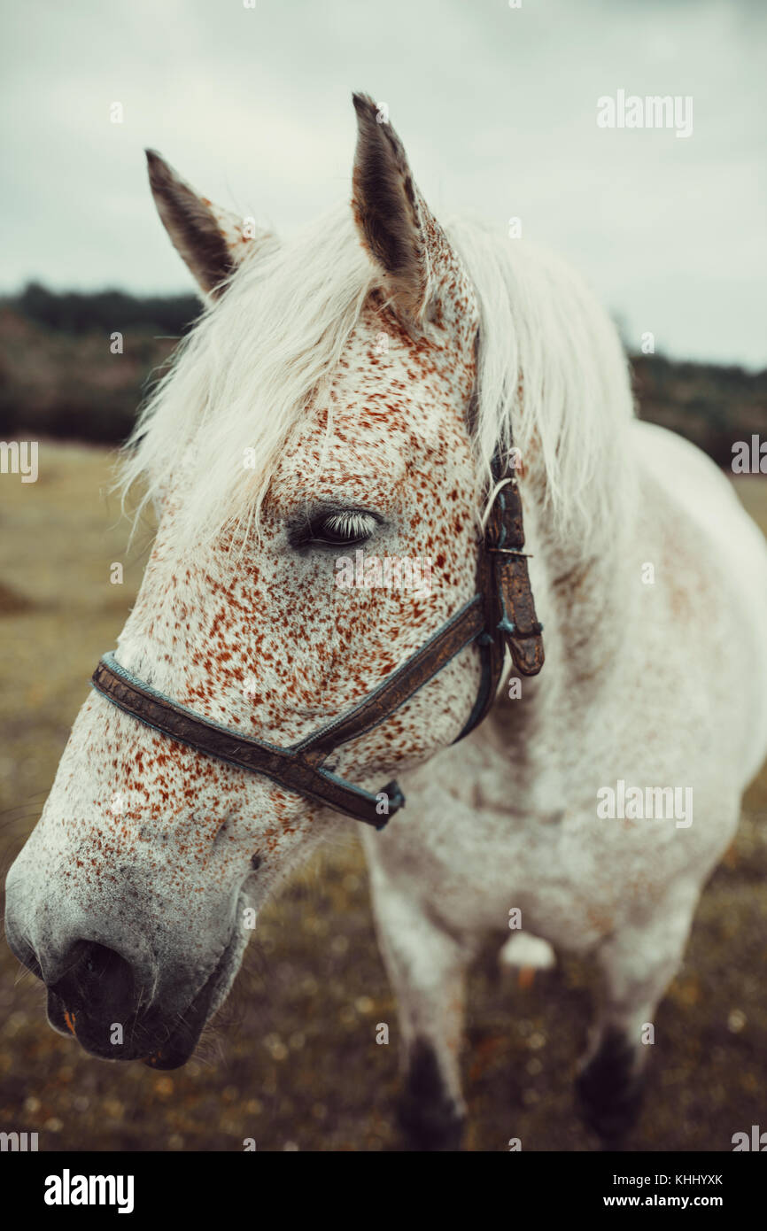 White horse with freckles Stock Photo