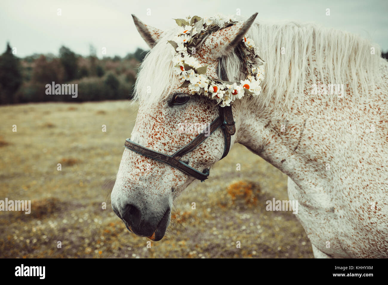 White horse with freckles - Stock Image