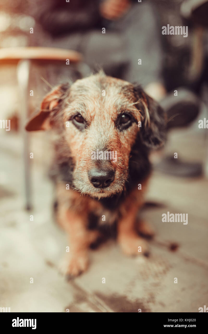 Old cute doggy - Stock Image
