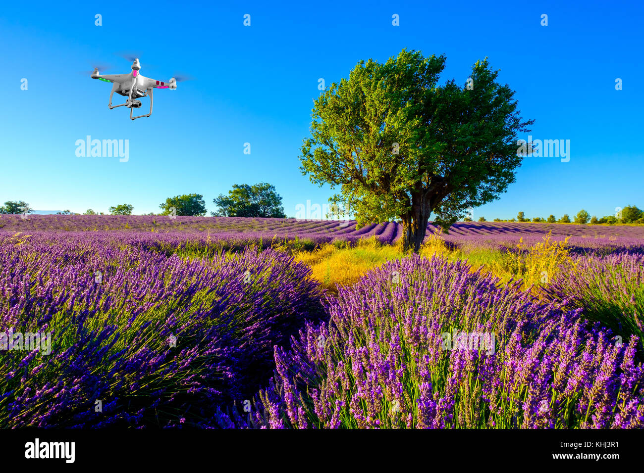 Tree in a field at Provence - Stock Image