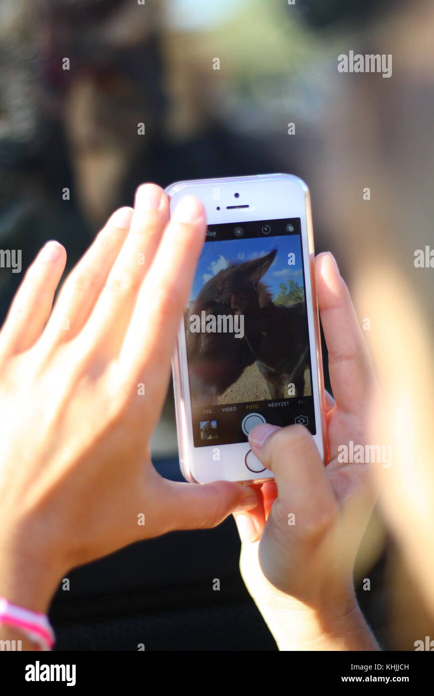 A girl taking a photo of a donkey with a cellphone mobile. Stock Photo