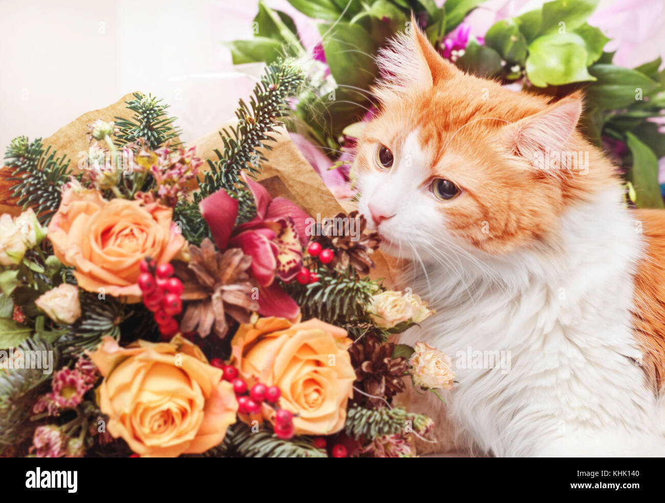 Cat With Flowers Stock Photos Cat With Flowers Stock Images Alamy