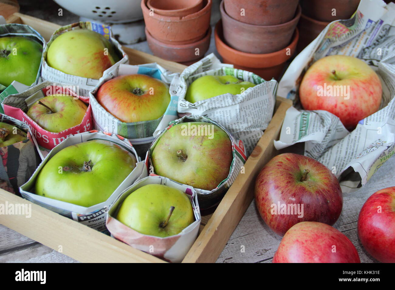 Freshly harvested apples (malus domestica) wrapped in newspaper and stored in wooden tray to help prevent rot during - Stock Image