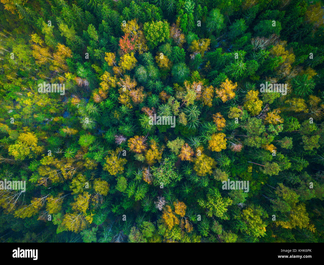 Drone photo of colorful trees in Lithuania, Europe Stock Photo ...