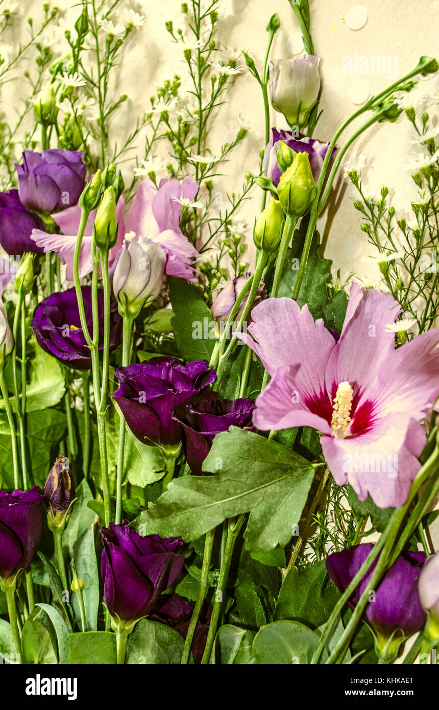 Fowers of purple hues of Lisianthus and Hibiscus framed by white small flowers of Gypsophila - Stock Image