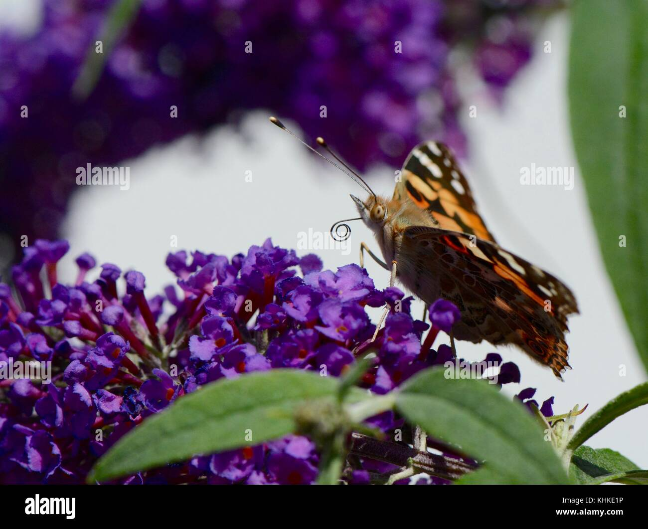 Anthropocene effect on pollinators - Stock Image