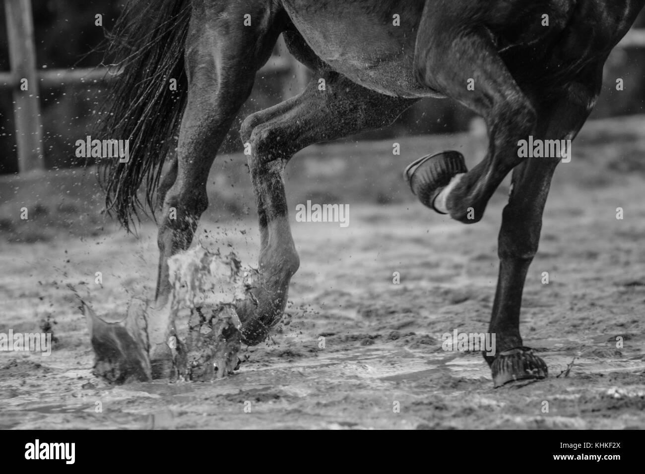 Just Legs - Stock Image