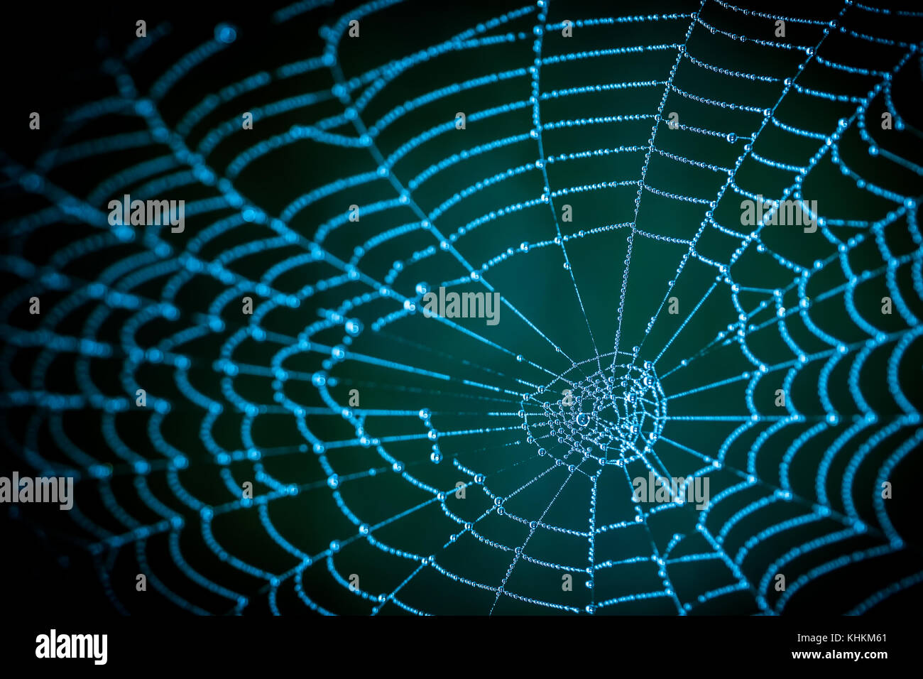 Detail of spooky cobweb on a dark night background. Blue texture from the spider web with dew drops. - Stock Image