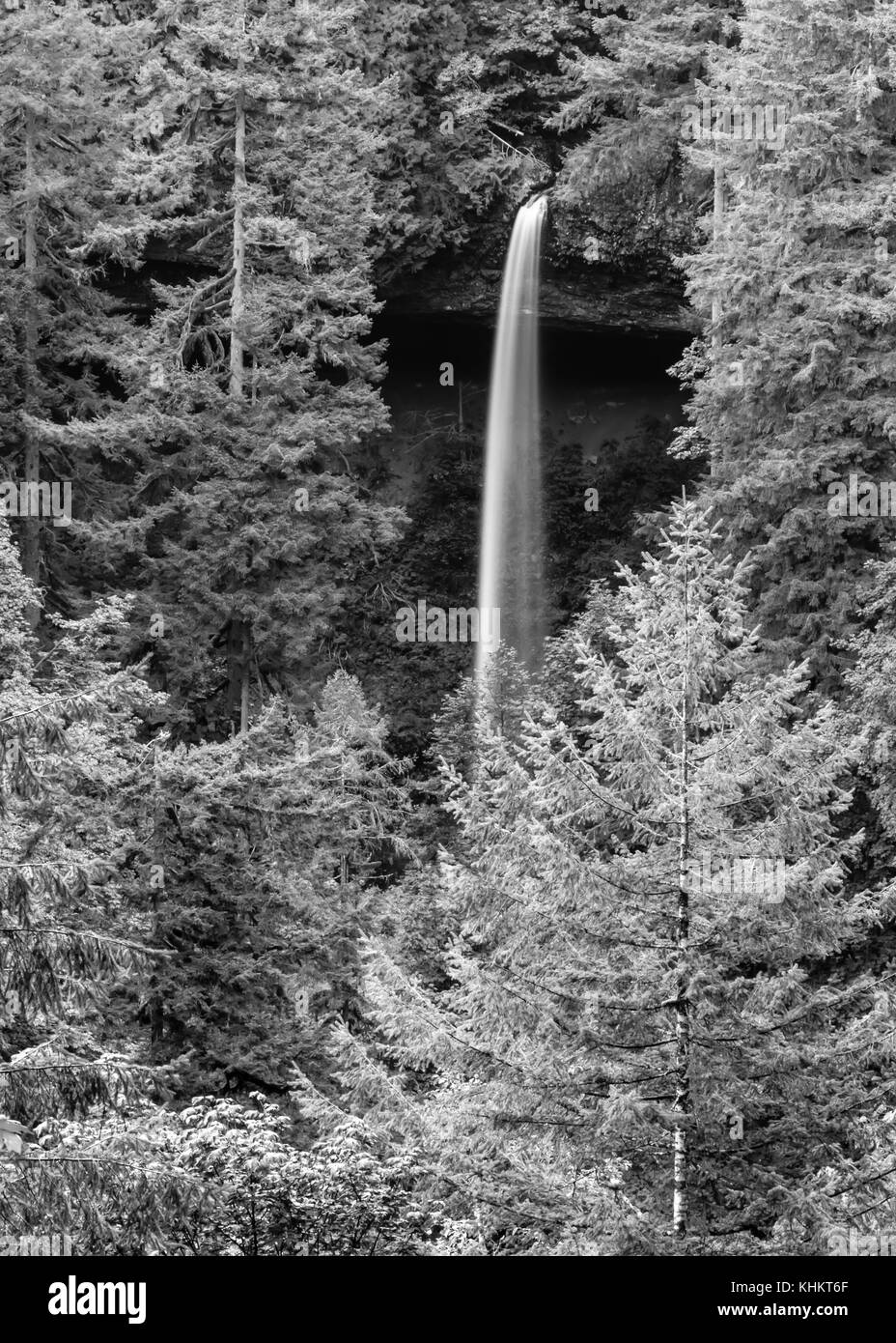 Silver Falls State Park Dusted with Snow - Stock Image