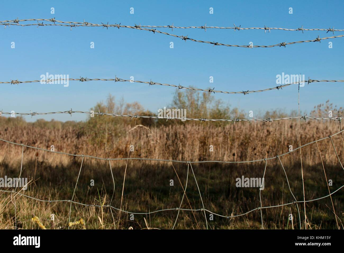 Cattle Behind Barbed Wire Stock Photos & Cattle Behind Barbed Wire ...