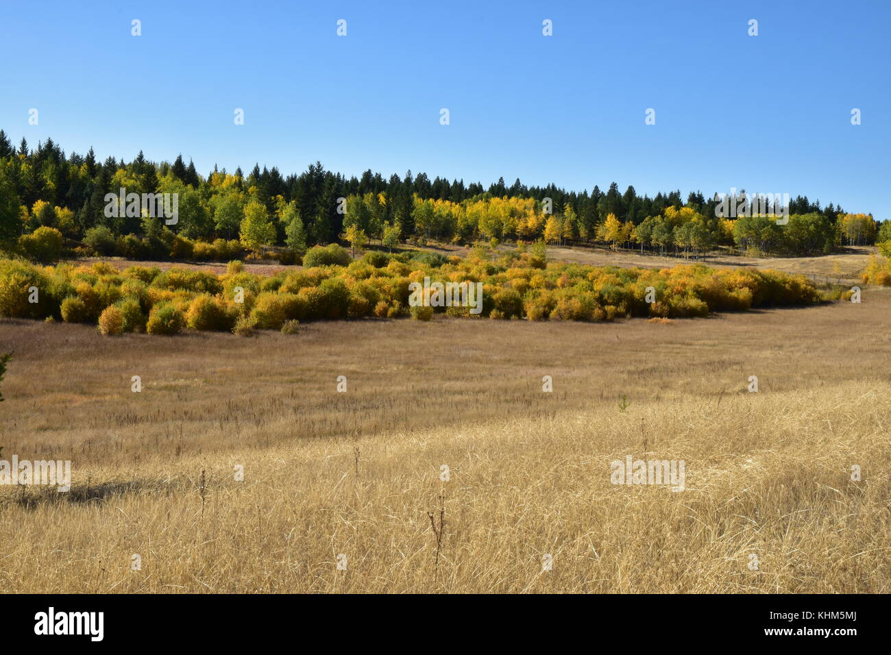 Pastureland in the fall - Stock Image