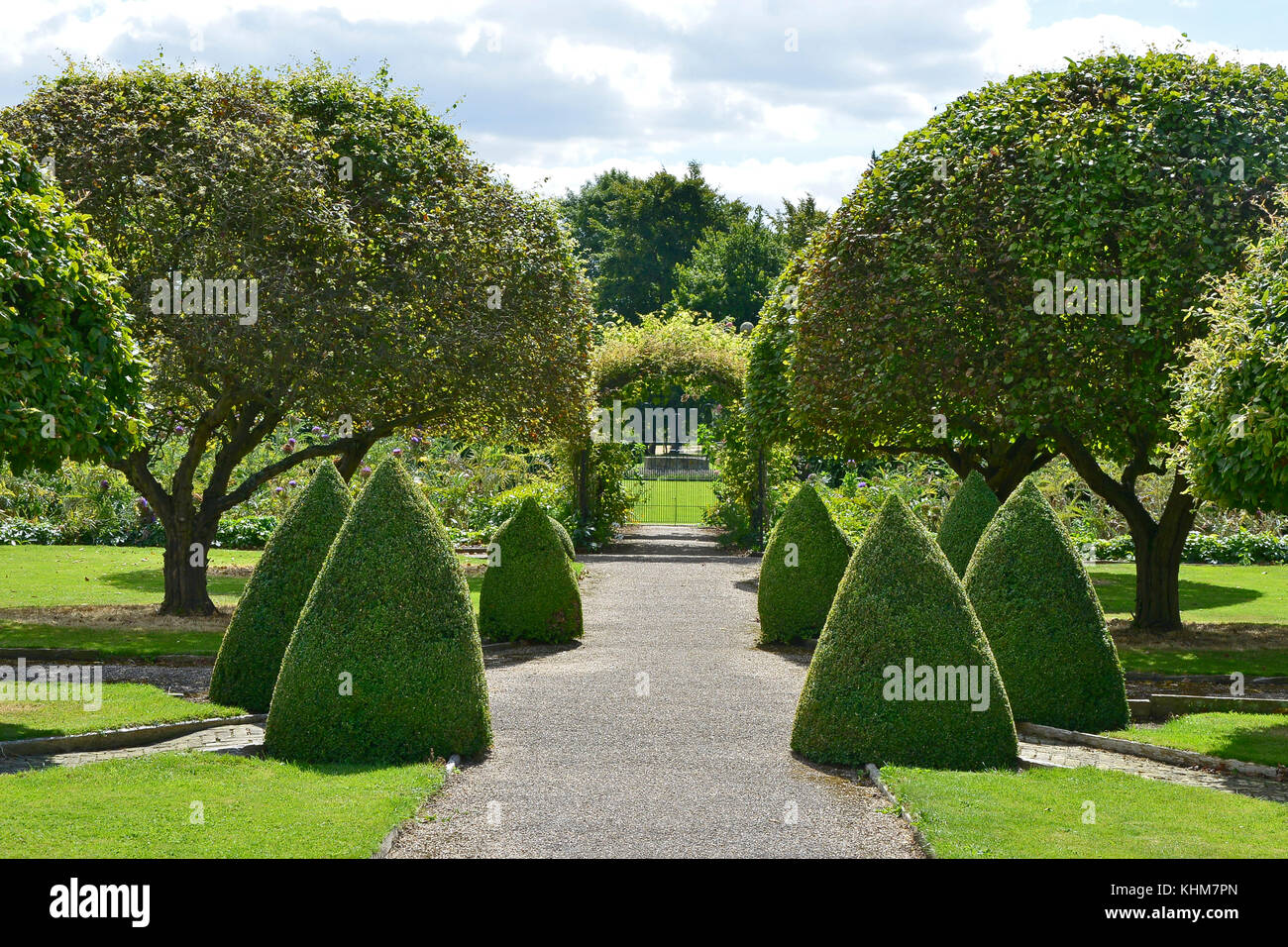 Clipped Box topiary bushes in a formal garden of a country house - Stock Image