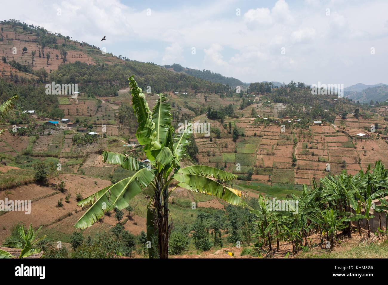 Walking back from Mountain Gorilla trek Rwanda - Stock Image